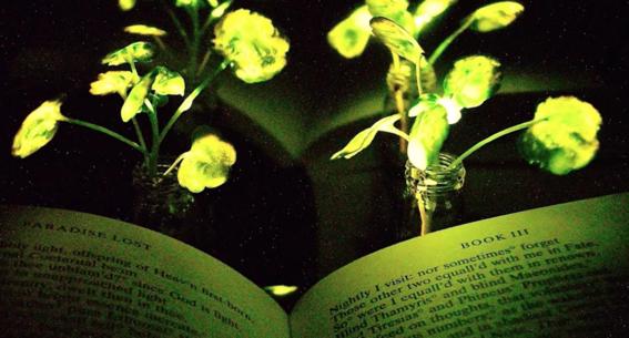arboles bioluminiscentes el futuro del alumbrado publico 2