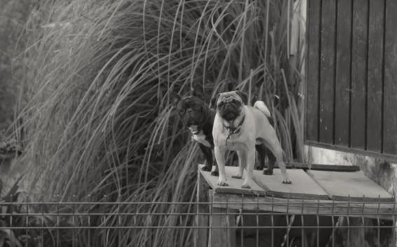 hotel dangu para perros 3