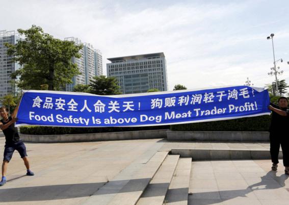 ¿por que seran masacrados 3 mil perros en china los proximos dias 5