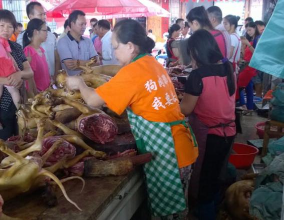 ¿por que seran masacrados 3 mil perros en china los proximos dias 6