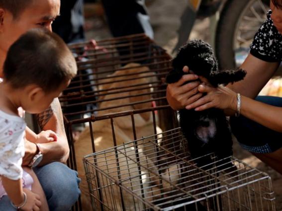 ¿por que seran masacrados 3 mil perros en china los proximos dias 3