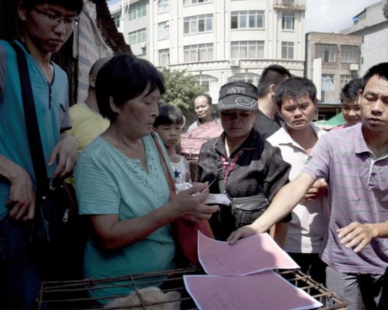 ¿por que seran masacrados 3 mil perros en china los proximos dias 7