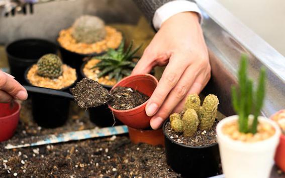 consejos para que tus cactus crezcan sanos 3