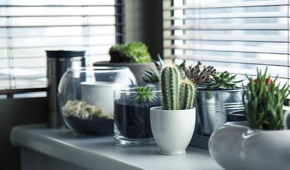 consejos para que tus cactus crezcan sanos 5