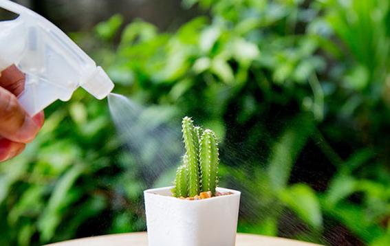 consejos para que tus cactus crezcan sanos 6