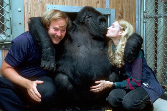 koko the gorilla 3