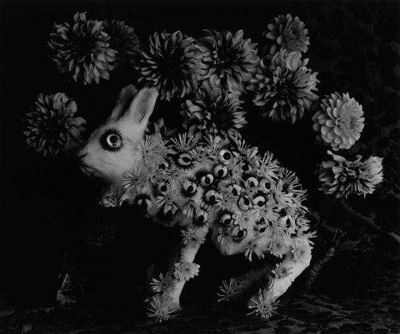 fotografos que muestran la cotidianidad mas extrana e hipnotica de japon 13