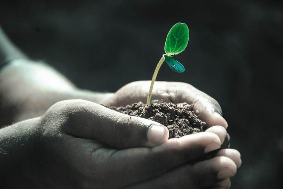 cientificos que descubrieron que las plantas tienen conciencia 3