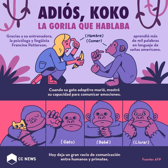 muere la gorila koko que hablaba lenguaje de senas 1