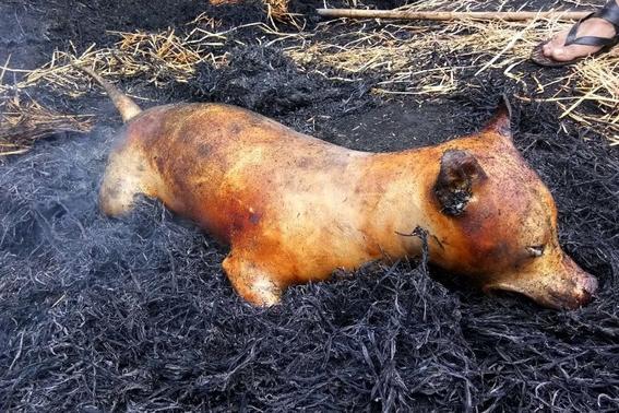 festival chino de carne canina 3