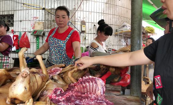 festival chino de carne canina 2