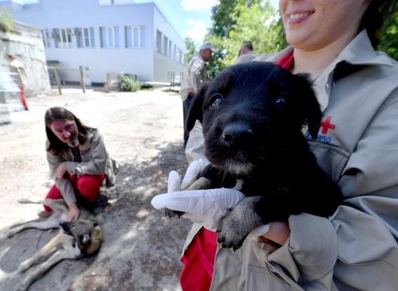 perros de chernobil en adopcion 1