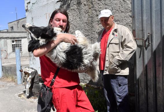 perros de chernobil en adopcion 2