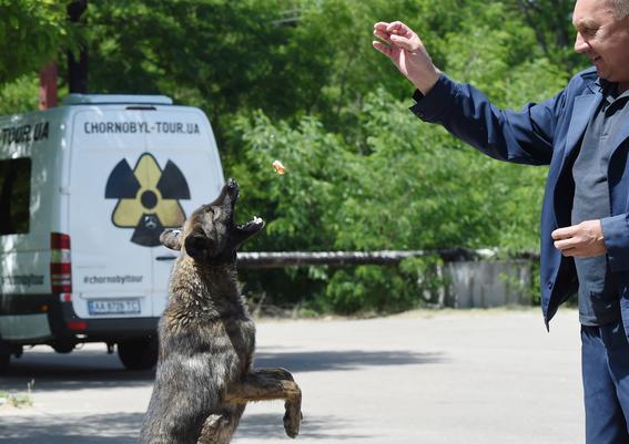 perros de chernobil en adopcion 3