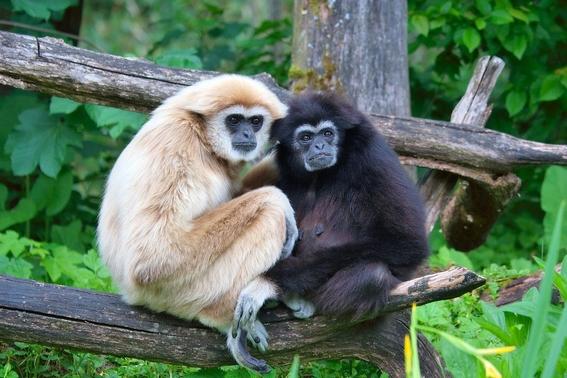 hallan nueva especie de simio primitivo en antigua tumba de china 2