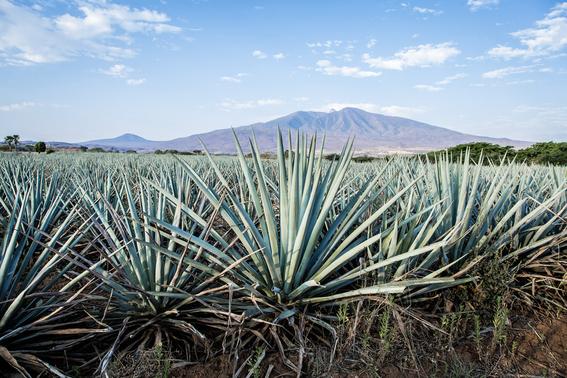 origin of tequila 1