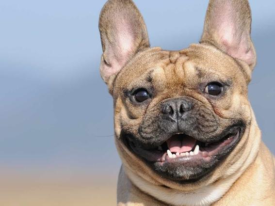 hablarle como bebe a tu perro lo hace mas feliz 1
