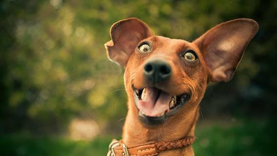 hablarle como bebe a tu perro lo hace mas feliz 2