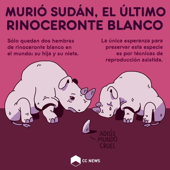 cientificos buscan salvar al rinoceronte blanco de la extincion 1