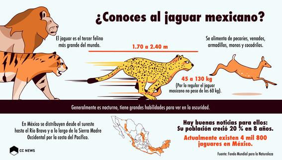 poblacion del jaguar mexicano 1
