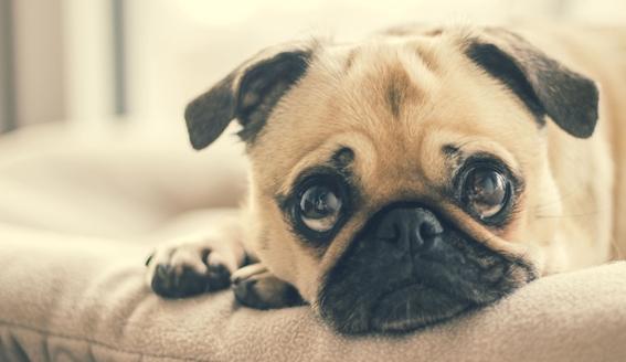 dia mundial de la zoonosis enfermedad de animales a personas 1