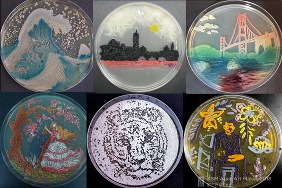 arte con hongos virus y bacterias 1