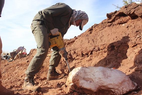 descubren dinosaurio de 200 millones de anos en argentina 1
