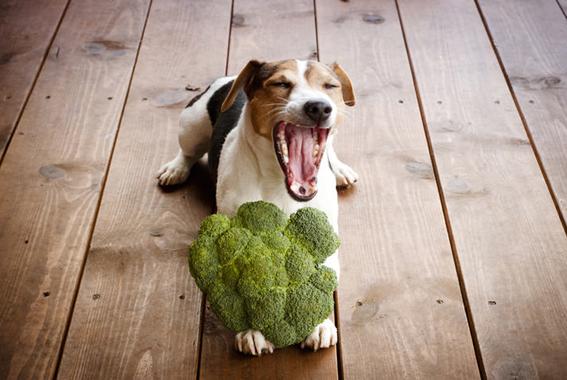 frutas y vegetales que puedes darle a tu perro 1