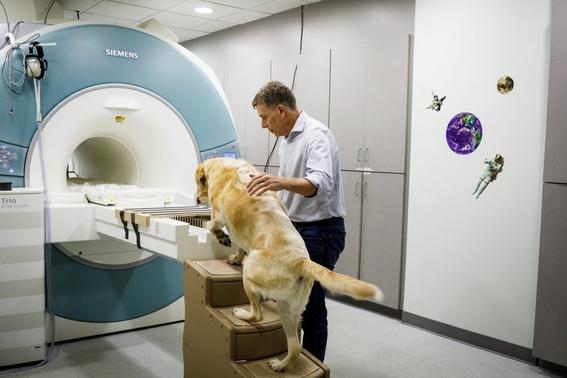 que pasa en el cerebro de tu perro 4