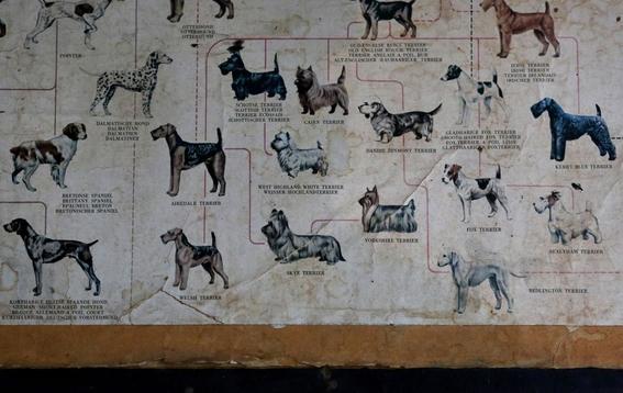 fotografias de yana paskova sobre extincion de perros en ruanda 2