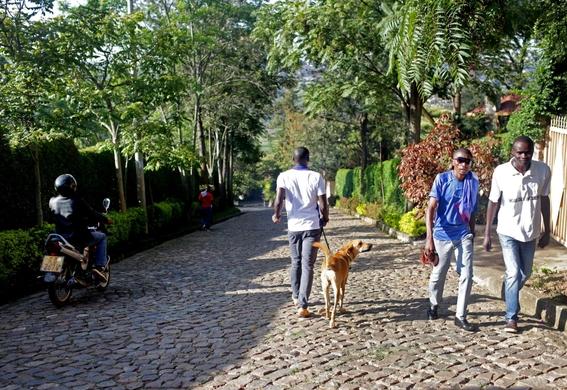 fotografias de yana paskova sobre extincion de perros en ruanda 4