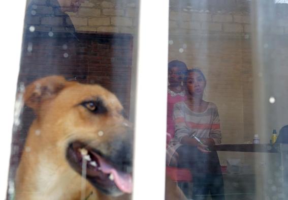 fotografias de yana paskova sobre extincion de perros en ruanda 5
