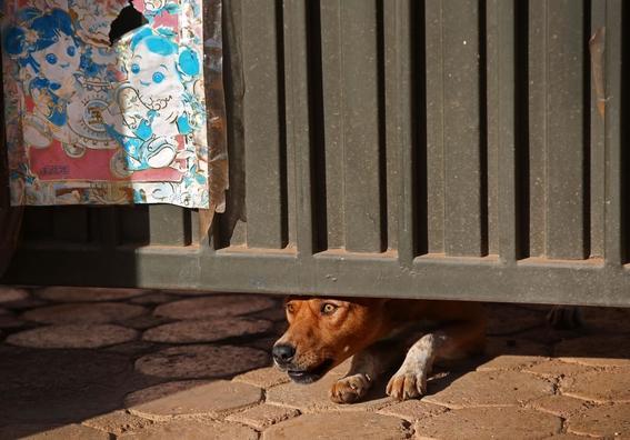 fotografias de yana paskova sobre extincion de perros en ruanda 8
