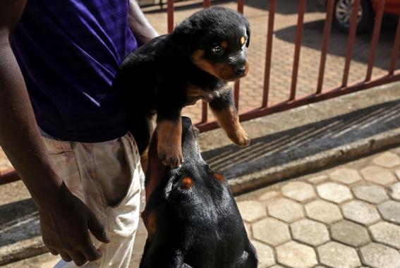 fotografias de yana paskova sobre extincion de perros en ruanda 9