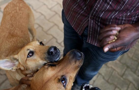 fotografias de yana paskova sobre extincion de perros en ruanda 12
