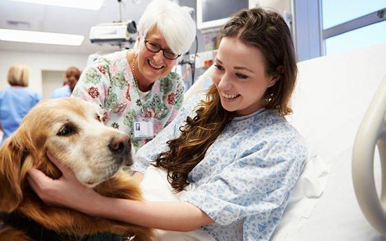 ¿que es terapia asistida con animales 1