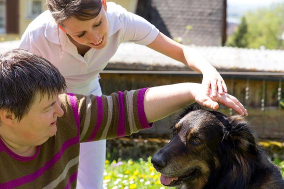 ¿que es terapia asistida con animales 2