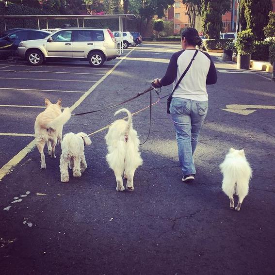 ¿que es terapia asistida con animales 5