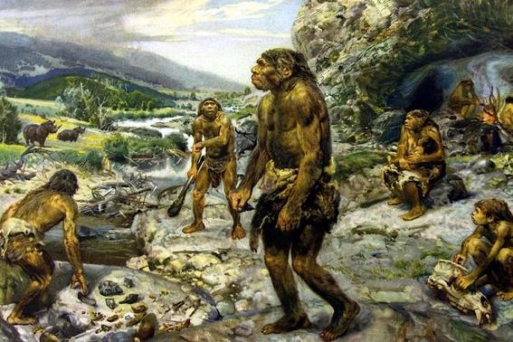 monos evolucionan y logran crear herramientas con piedras 1