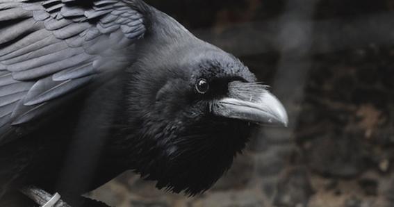 animales con poderes magicos segun la brujeria 9