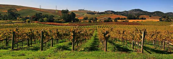 vinos de california pueden tener particulas radiactivas 1