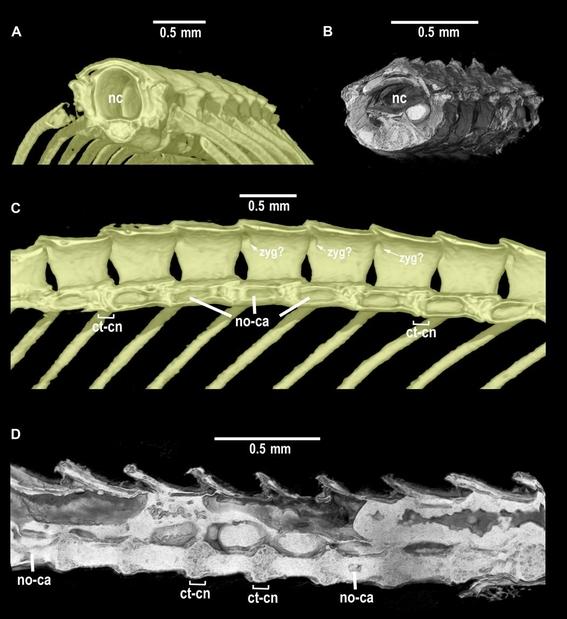 descubren serpiente de 99 millones de anos fosilizada en ambar 2