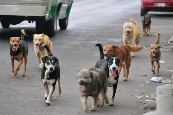 dia internacional del perro callejero 1