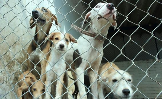 dia internacional del perro callejero 2
