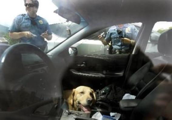 perro en el auto 2