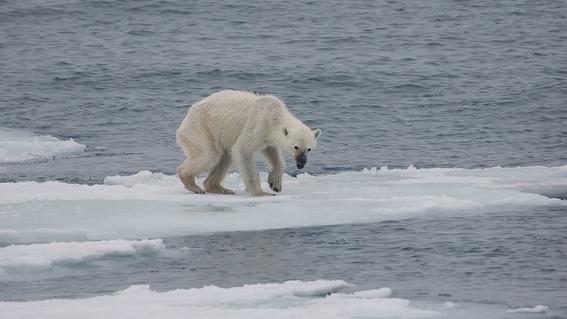 calentamiento global ¿que es y cuales son sus causas 2