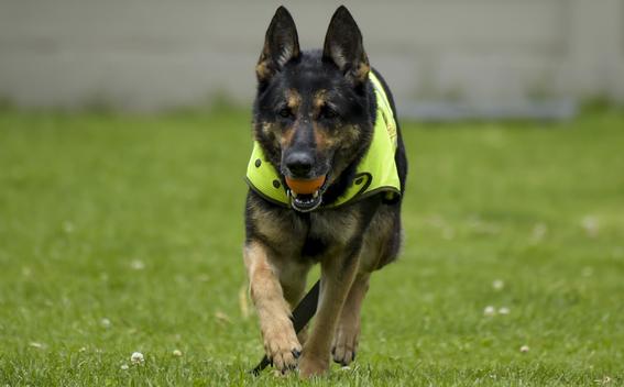 sombra perra policia amenazada por narcos en colombia 1