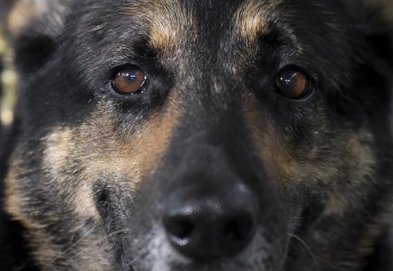 sombra perra policia amenazada por narcos en colombia 3