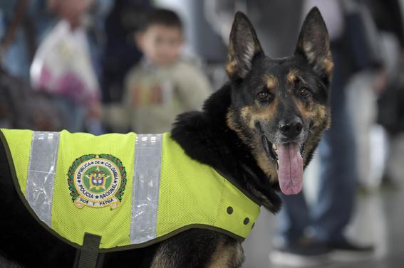 sombra perra policia amenazada por narcos en colombia 4