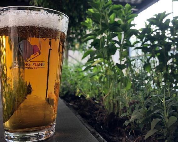 donde tomar la mejor cerveza en la ciudad de mexico 1